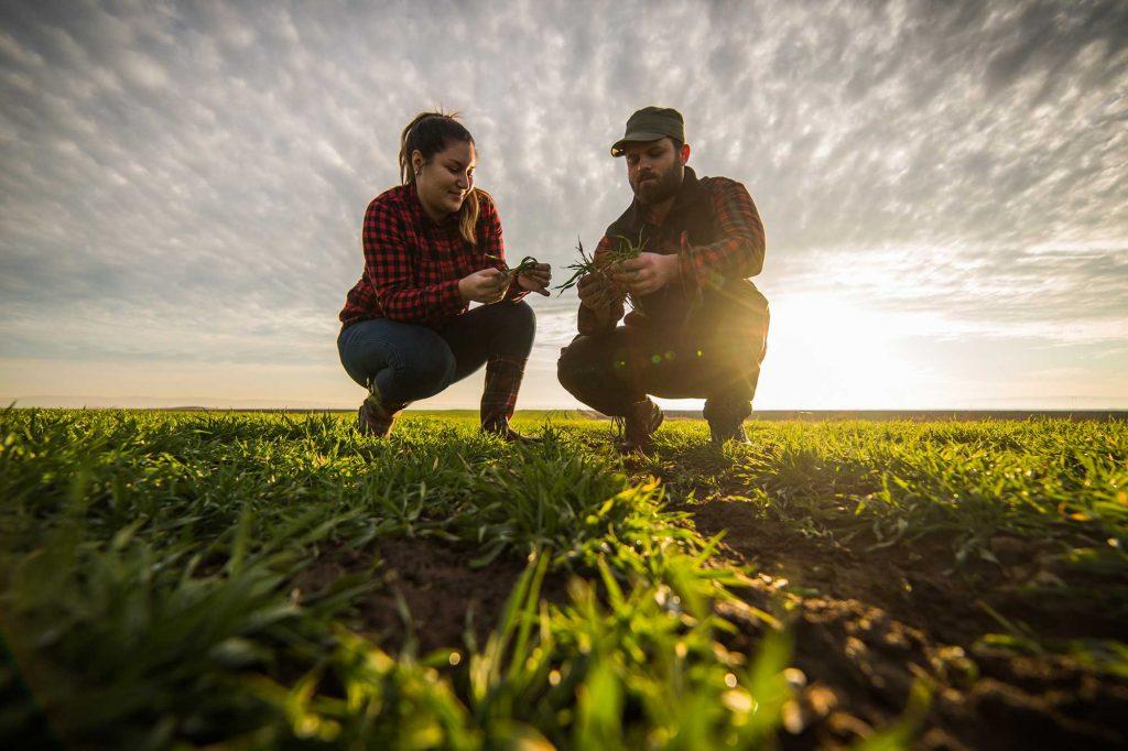 Due contadini controllano le loro piante in un campo